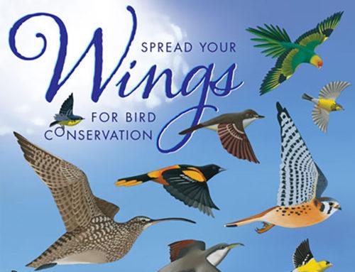 Ashland Oregon: Rogue Valley Bird Day at North Mountain Park