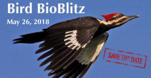 Bird BioBlitz